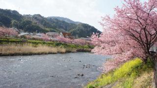 河津桜まつりバスツアー