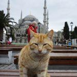 トルコ(11)イスタンブール観光(アヤソフィア・地下宮殿・グランドバザール・ブルーモスク)