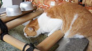 招き猫発祥の縁結びパワースポット「今戸神社」