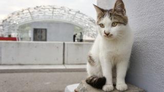 香川(5) 男木島観光&男木島の猫