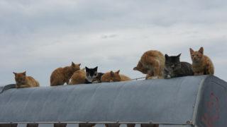 香川(6) 男木島の猫スポット