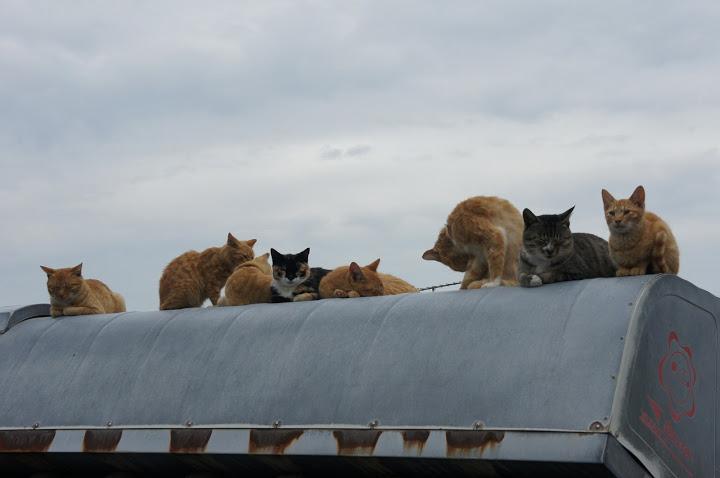 男木島屋根猫