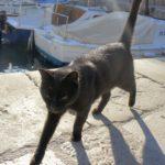 ドブロブニクの猫スポット