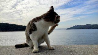 広島(2)真鍋島観光&ねこ歩き