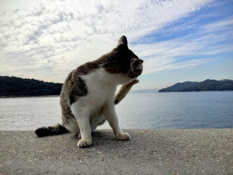 manabe cat