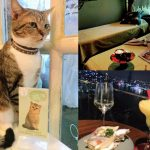 タイ(6)バンコクで癒し体験(一軒家スパ&猫カフェ&屋上バー)