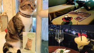 タイ(6)バンコクで癒し(一軒家スパdivana&猫カフェ&ルーフトップバー)