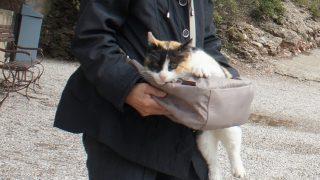 旅先での猫写真&岩合流ネコ撮影術