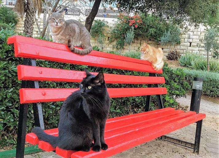 マルタ・インディペンデンスガーデンの猫
