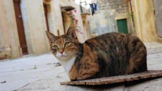 マルタの猫スポット