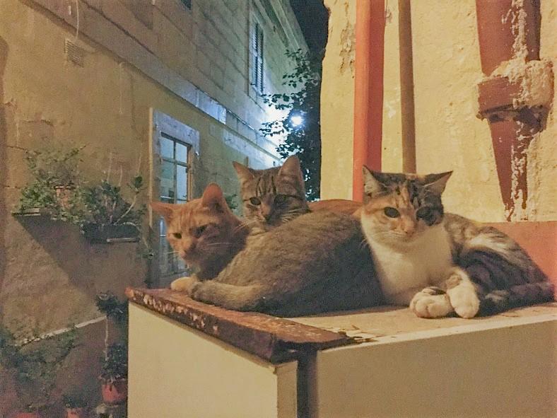 マルサシュロックの猫