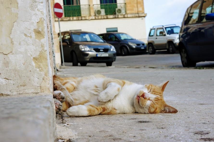 バレッタ旧市街の路上で熟睡する猫