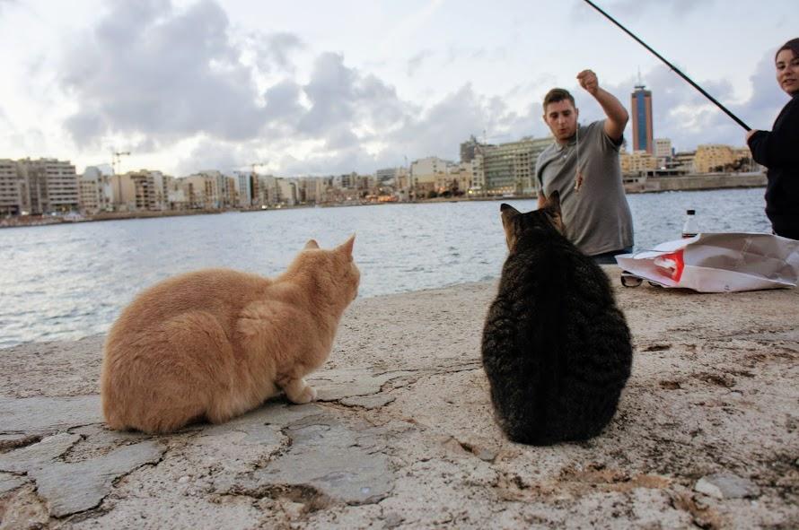 マルタ・スリーマの猫