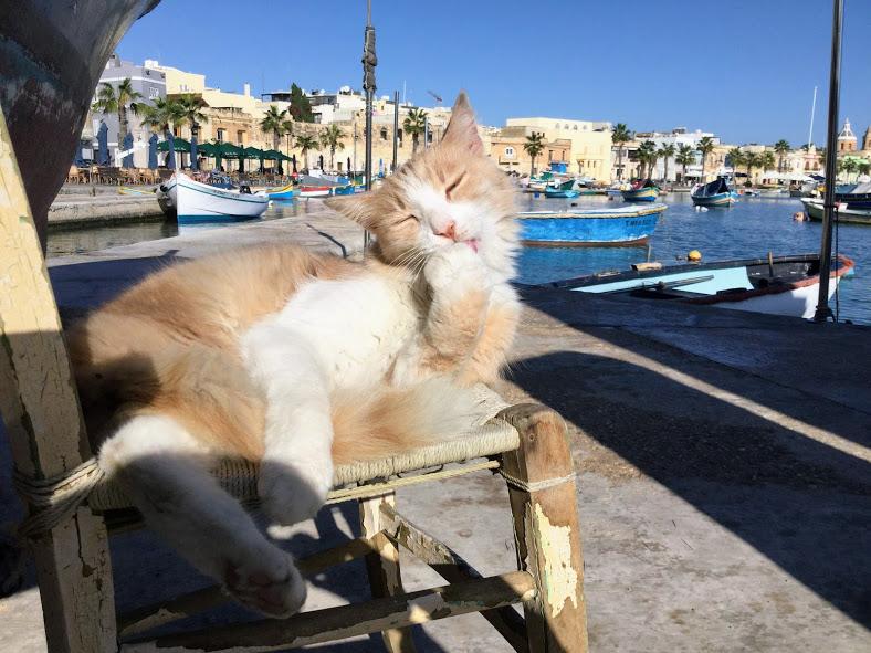 ルサシュロック湾ののんびり猫