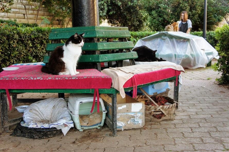 マルタ・インディペンデンスガーデンの猫ハウス