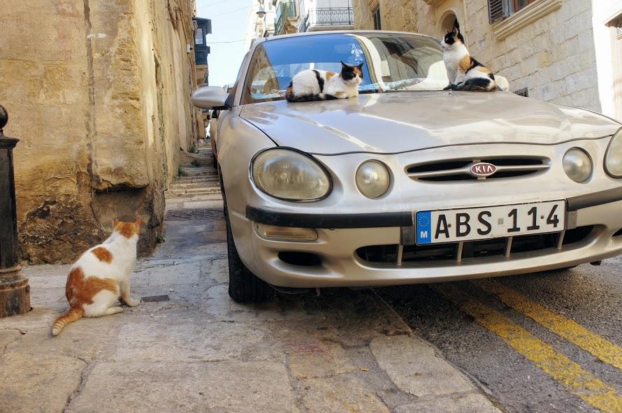 バレッタ旧市街の猫2匹